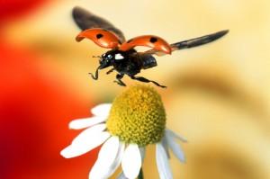 cfb_de_psd_Tipps_Makro_02_Insekten