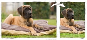 hundefotos-2