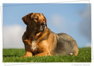 hundefotos-3