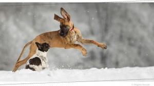 hundefotos-4