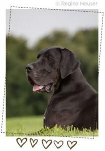 hundefotos-7